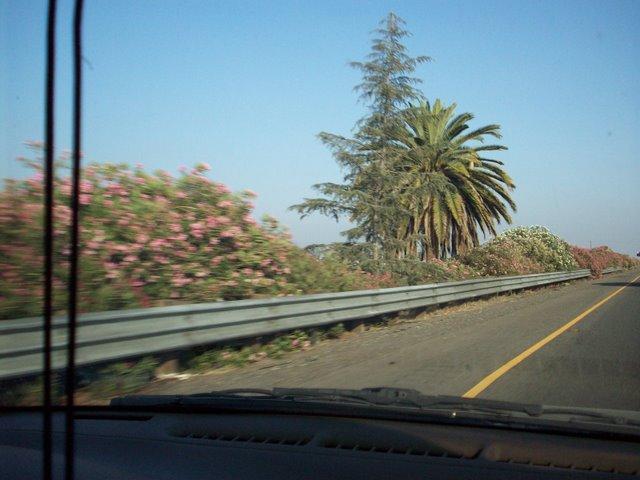 Pine & Palm