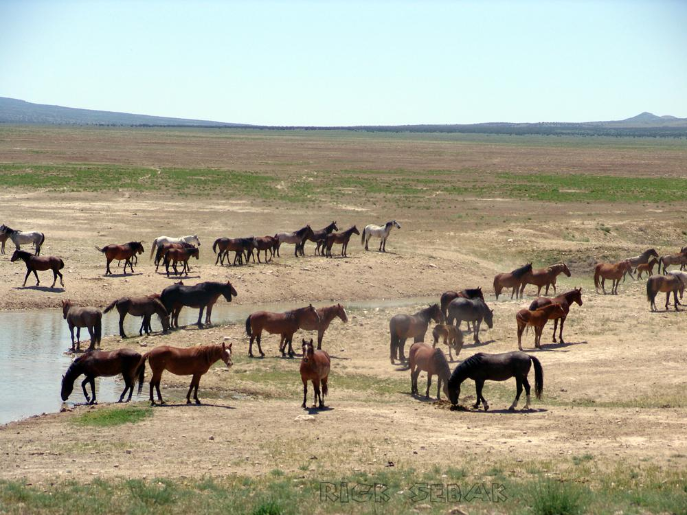 horses-along-the-LH-bypass
