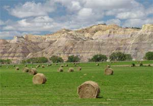 roundup-hay-bales