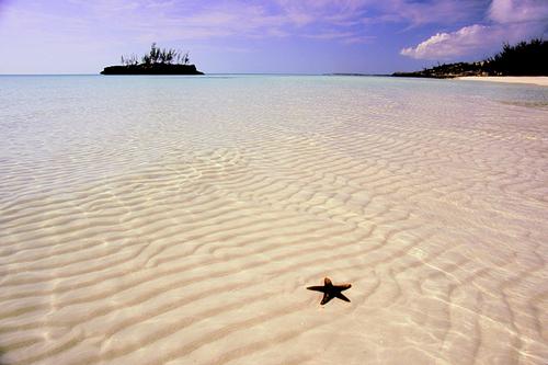 star-fish-gaulding-cay