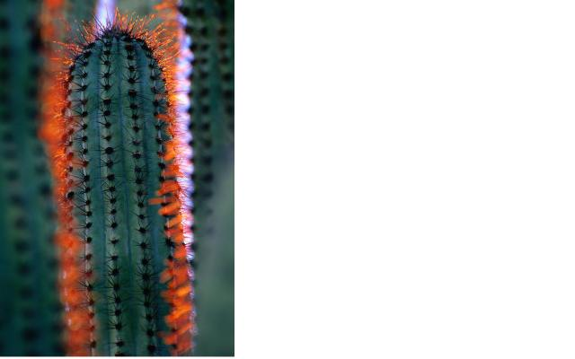 cactus-close-up