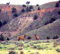 photo_elk-south-of-wright