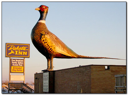 worlds-largest-pheasant