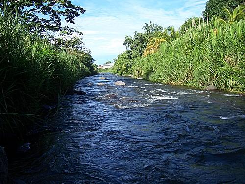 roseau-river
