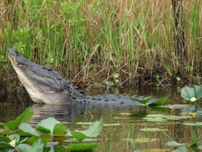 family-vacations-okefenokee-national-wildlife-refuge-3