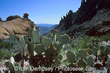 Superstition Wilderness, Tonto National Forest, Arizona