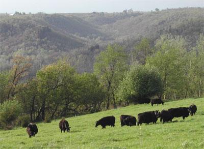 coon_creek_pasture