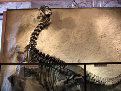dinofossil