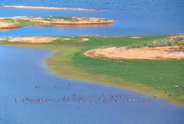 geese_lake_sakakawea