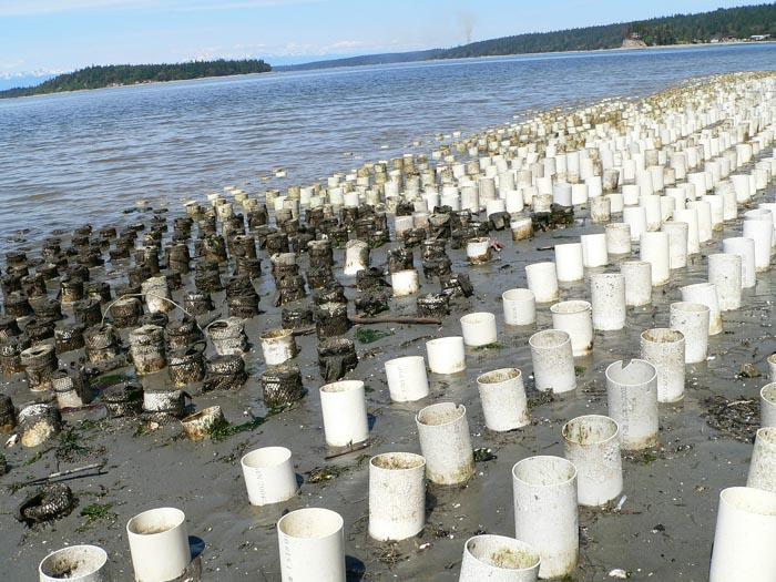newfarm 2007 protect our shoreline.org