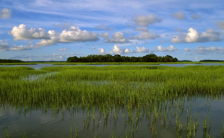 pinckney marsh by ERic Horan; us fish & wildlife service
