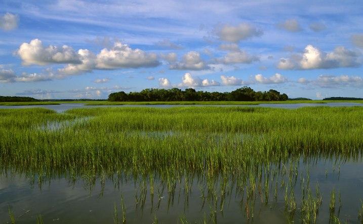 pinckney marsh by ERic Horan; us fish & wildlife service