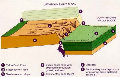 NPS cross section