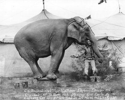 elephant trick