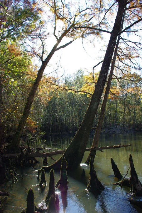 pano chipola  river