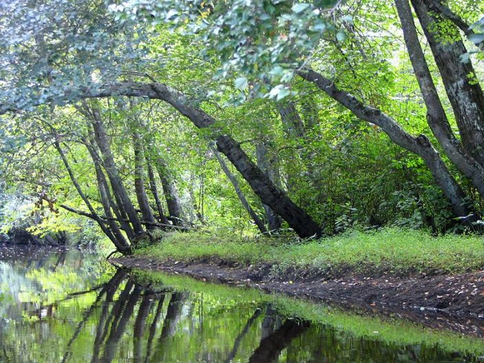 800px-Batsto_River