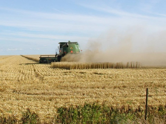 pano CatDaddy harvesting wheat