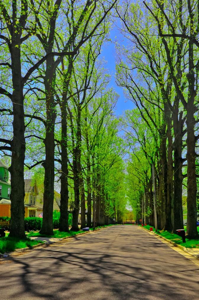 poplar-trees_0348-edit