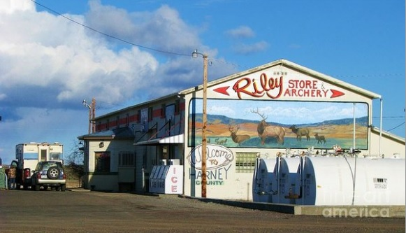 riley store fine art america by Michele Penner