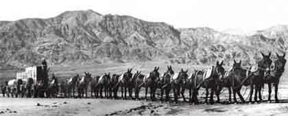 20_Mule_Team_in_Death_Valley