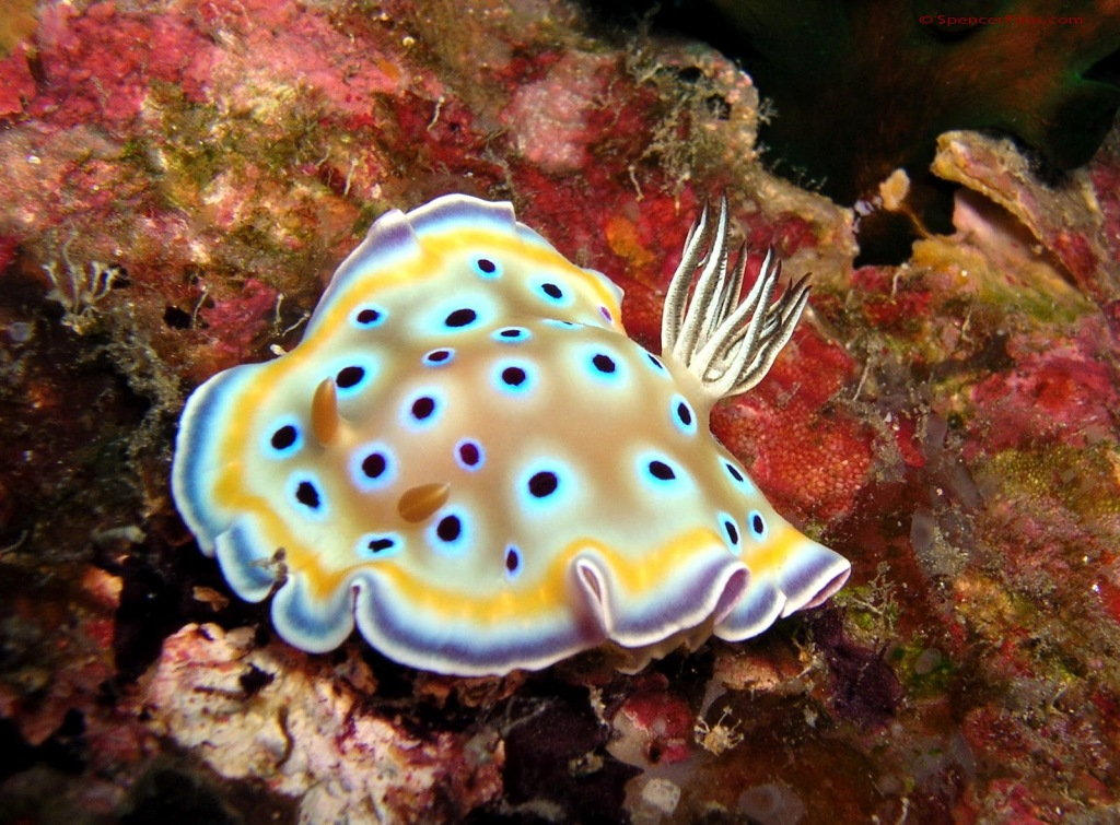 nudibranch5 the junglestore.blogspot